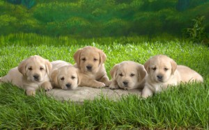 Cute-Dog-Photography-5-600x374